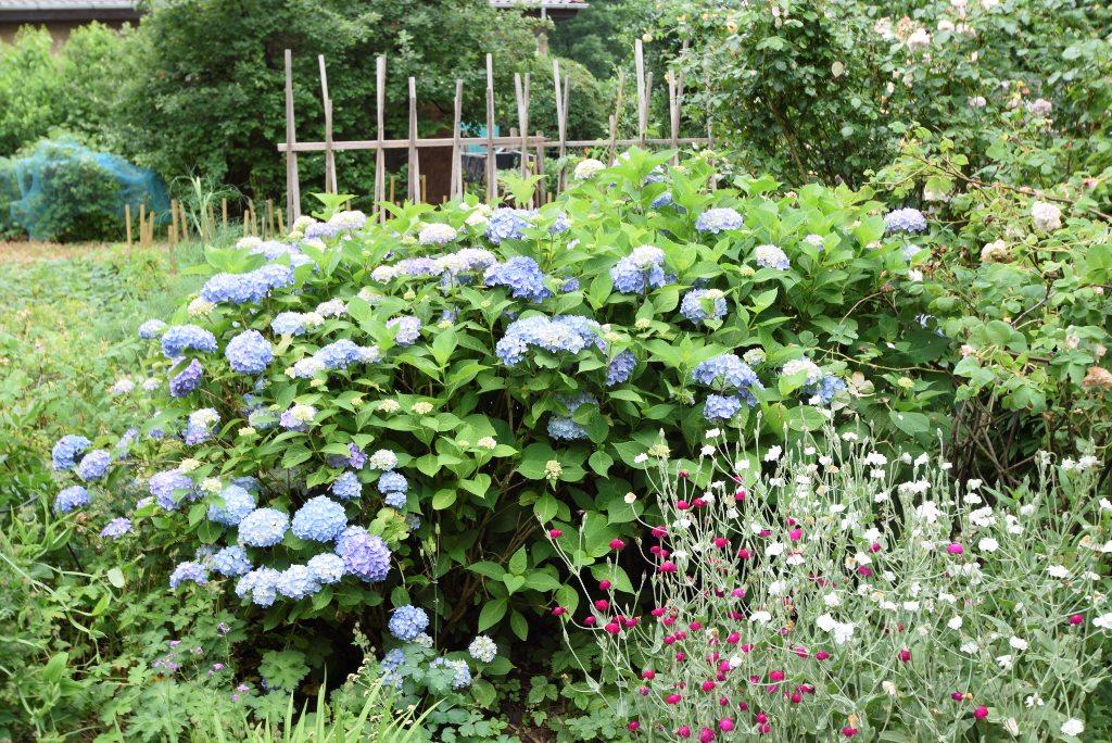 Liebevoll bepflanztes und gepflegtes Grundstück